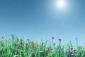Spring: Fresh Starts