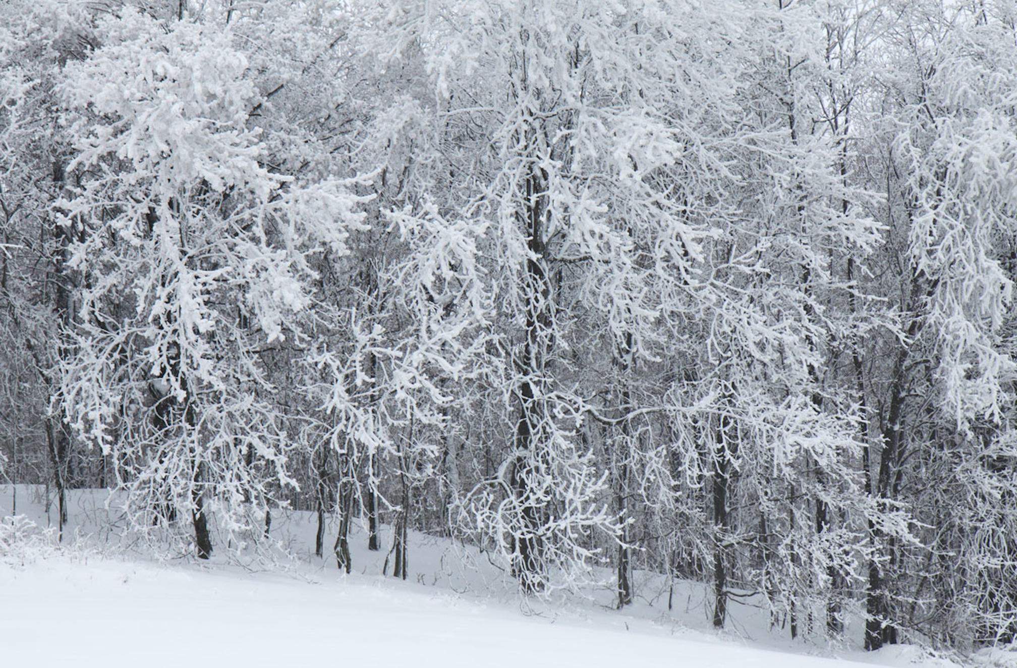Snow: Like a Silence Vitamin